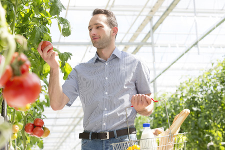 Man in greenhouse plucking tomato from plant LANG_EVOIMAGES