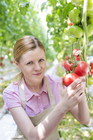 Young woman in greenhouse examining tomatoes