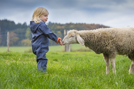 Germany, Mindelheim, toddler and sheep together on a meadow LANG_EVOIMAGES