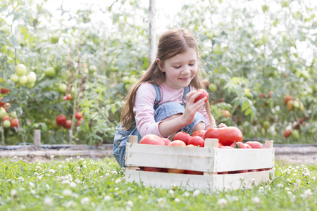 Smiling girl looking at harvested tomatoes in crate