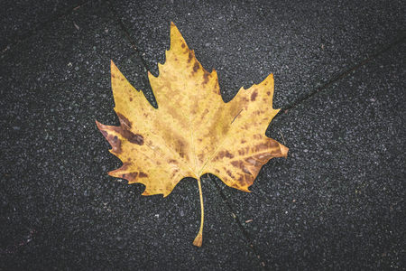 perishable: Autumn leaf LANG_EVOIMAGES