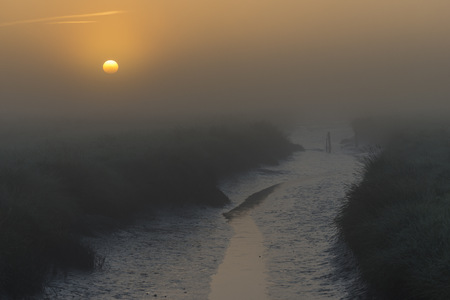 westerheversand: Germany, Schleswig-Holstein, North Frisia, Westerhever, salt marsh at sunset