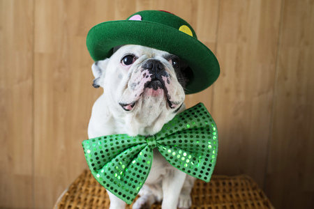 Portrait of French Bulldog dressed up with green hat and bow tie LANG_EVOIMAGES