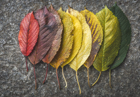 Different autumn leaves LANG_EVOIMAGES