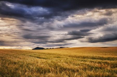 Scotland, East Lothian, Field of barley at sunset