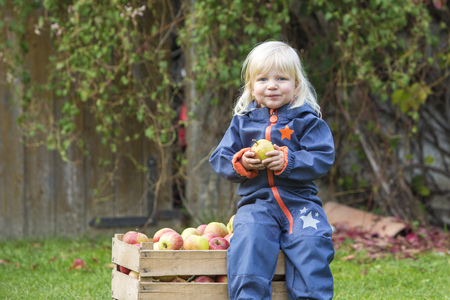 Portrait of blond toddler wearing blue overall sitting on wooden box with apples