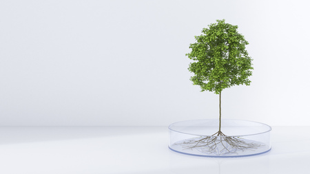 reproducing: Tree growing in petri dish