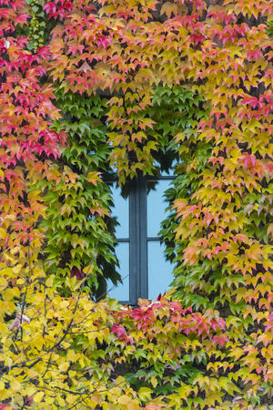 Germany, Bavaria, Munich, leaves around a window in autumn
