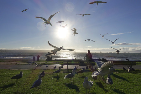 Canada, Vancouver, seagulls at Pacific Coast LANG_EVOIMAGES