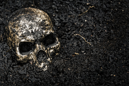 morbidity: Skull in wet soil