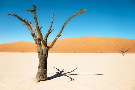 clime: Namibia, Namib Desert, dead tree in Deadvlei