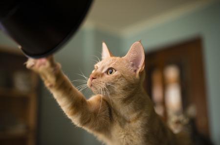 Portrait of curious cat