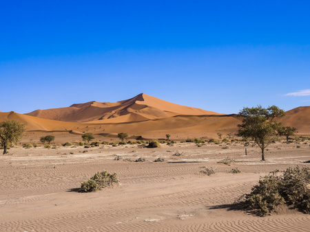 vlei: Namibia, Hardap, Naukluft Park, view to dunes of Namib Desert with camel thorns in the foreground LANG_EVOIMAGES
