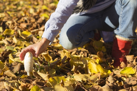 cowering: Girls hand reaching out for mushroom standing between autumn leaves