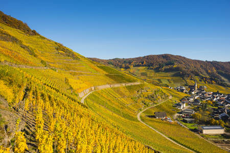 Germany, Rhineland-Palatinate, Eifel, Ahr Valley, Mayschoss, Vineyard in autumn