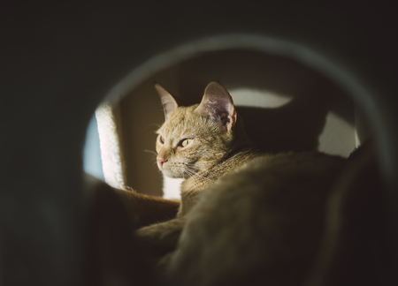 peephole: Sleepy cat inside a lair LANG_EVOIMAGES