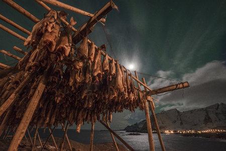 stockfish: Norway, Lofoten, Hamnoy Island, Stockfish LANG_EVOIMAGES