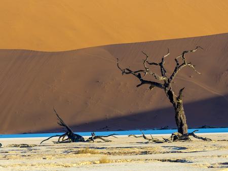 clime: Namibia, Naukluft Park, Namib Desert, Dead Vlei, dead camel thorn in front of dune LANG_EVOIMAGES