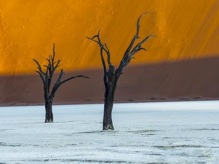 vlei: Namibia, Naukluft Park, Namib Desert, Dead Vlei, two dead camel thorns in front of dune LANG_EVOIMAGES