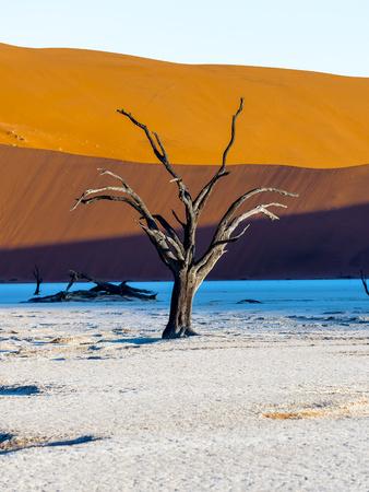 vlei: Namibia, Naukluft Park, Namib Desert, Dead Vlei, dead camel thorn in front of dune LANG_EVOIMAGES