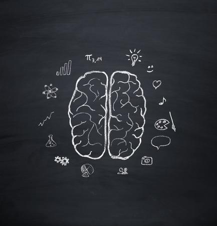 Brain hemisphere model