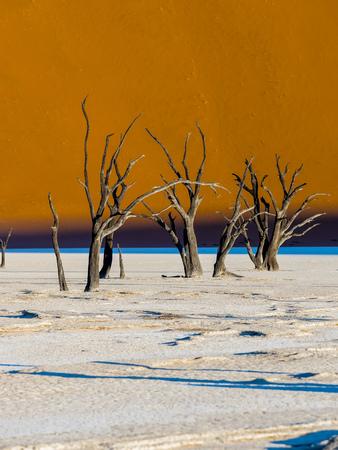 clime: Namibia, Naukluft Park, Namib Desert, Dead Vlei, dead camel thorns in front of dune