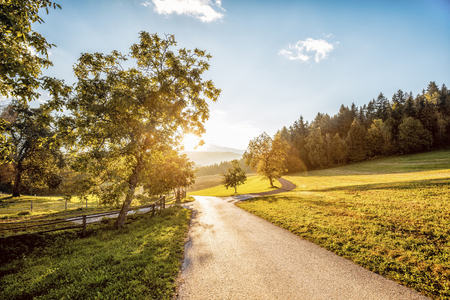 Austria, Carinthia, Ludmannsdorf, country road, forest in autumn, against the sun LANG_EVOIMAGES