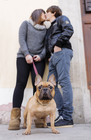 Portrait of French bulldog with owners kissing in the background LANG_EVOIMAGES