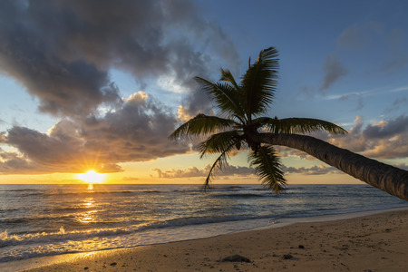 Seychelles, Praslin, Anse Kerlan, Coconut palm and Cousin Island at sunset