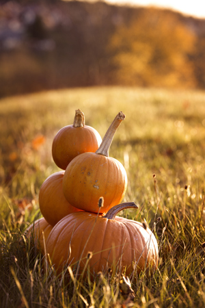 Pile of pumpkins on a meadow