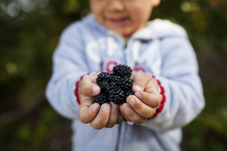 Hands of little boy holding blackberries LANG_EVOIMAGES