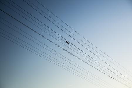 nevada: Bird perching on power supply line
