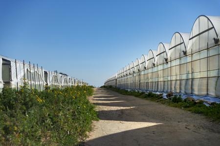 Italy, Ragusa, Santa Croce Camerina, row of greenhouses
