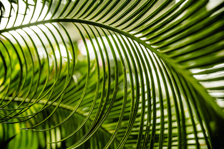 Palm leaf, close-up