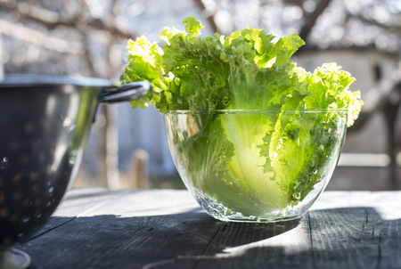 Glass bowl of leaf salad LANG_EVOIMAGES