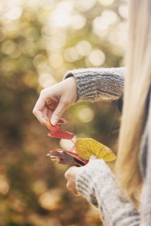 discolored: Teenage girl sorting autumn leaves
