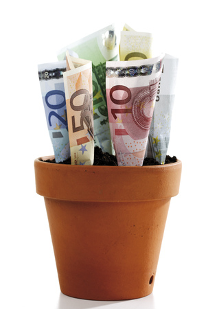 Euro Notes In Flower Pot