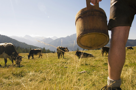 chordates: Farmer On Pasture, Low Section LANG_EVOIMAGES