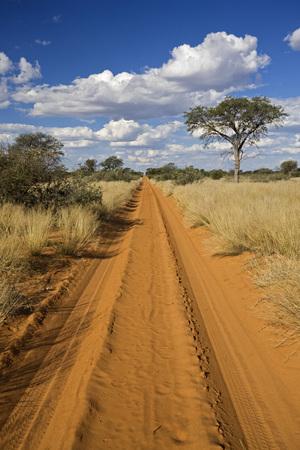 Africa, Botswana,Track Through Kalahari Desert