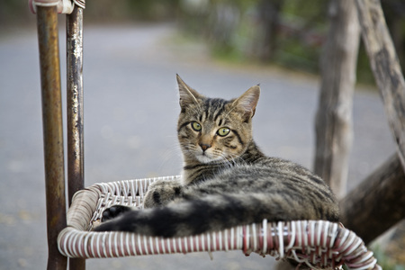 chairs: Cat Lying On Chair, Portrait LANG_EVOIMAGES