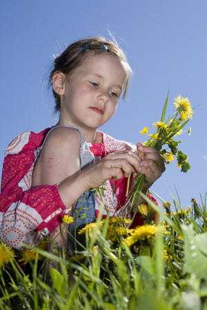 cowering: Young Girl (6-7) Picking Dandelion Flowers In The Meadow LANG_EVOIMAGES