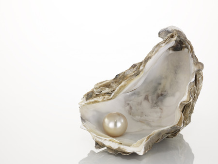 Pearl On Oyster Shell, Close-Up