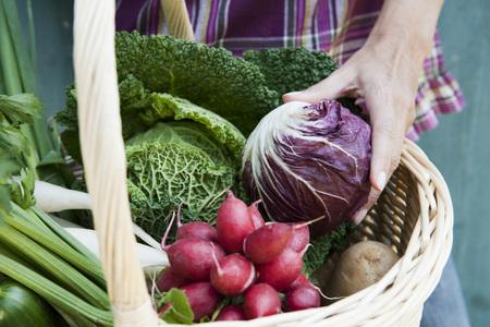 Germany,Bavaria,Person Holding Basket With Fresh Vegetables,Detail LANG_EVOIMAGES
