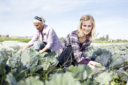 cowering: Germany,Saxony,Women Working At The Farm