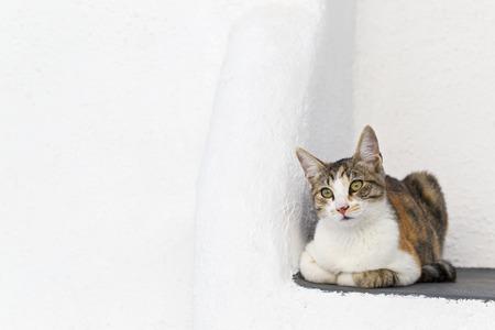 Europe,Greece,Cyclades,Oia,Santorini,Cat Sitting In A Corner