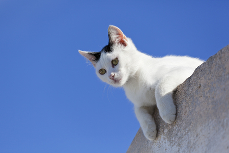 Europe,Greece,Cyclades,Santorini,Cat Watching From Wall
