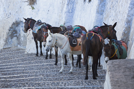 Greece,Cyclades,Thira,Santorini,Fira,Saddled Mules Standing On Stairs