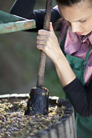 Croatia,Baranja,Young Woman Crushing Grapes,Close Up