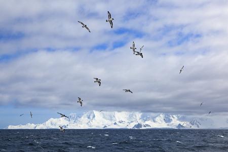 South Atlantic Ocean,Antarctica,Antarctic Peninsula,Gerlache Strait,Cape Petrels Flying In The Sky