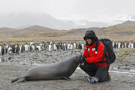 South Atlantic Ocean,United Kingdom,British Overseas Territories,South Georgia,St. Andrews Bay,Mature Woman With Seal And Penguins In Background LANG_EVOIMAGES